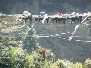 Yaks tiptoeing gingerly across the high bridge leading to the Namche hill . . . consider yourself lucky if you don't have to pass a yak train on a bridge