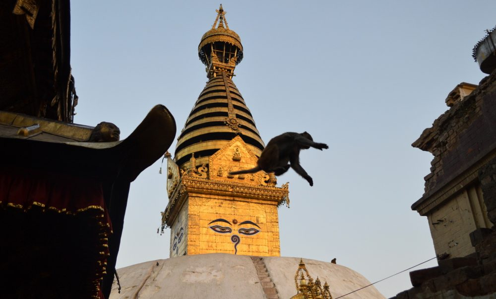 A monkey jumps from temple to temple at Swoyambhunath Temple complex, Kathmandu