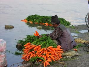 Washing carrots in the filthy Bagmati River