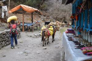 Ponies of Langtang, heading up the valley to deliver supplies to the higher villages