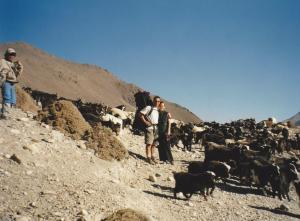 There are plenty of sheep and goats in the Kali Gandaki Valley