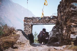 nepal-manaslu-76-140