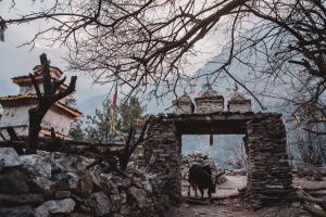 nepal-manaslu-76-208